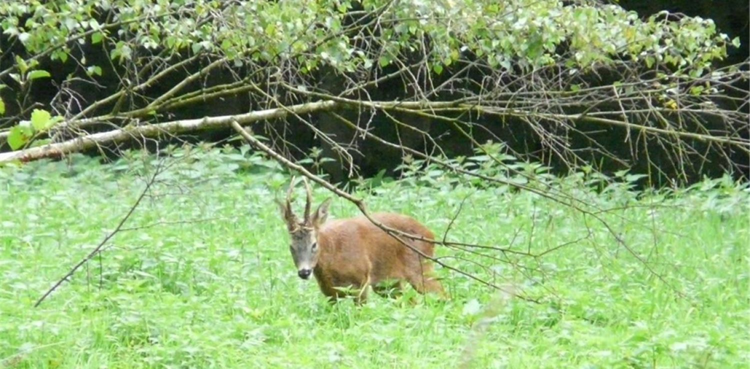 Tell Your Brockholes Nature Story