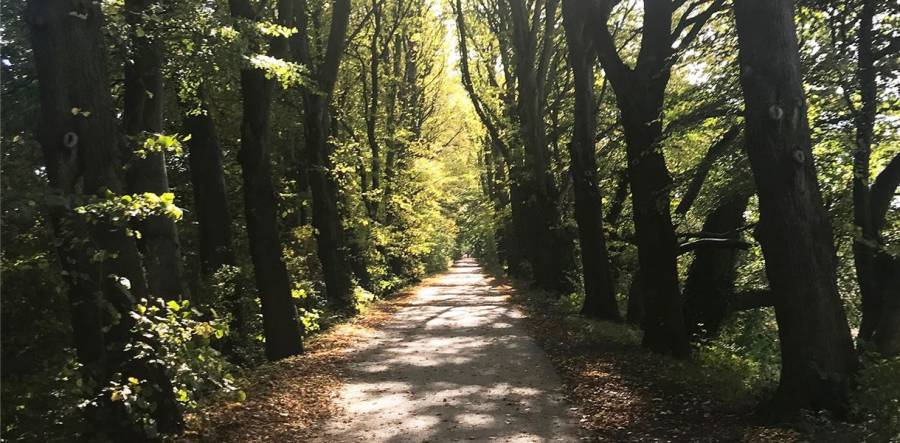 A Walk In The Park With Artist Fiona Candy - Preston- 2pm -4pm - 5/10/19