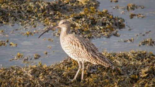 No More Birds at Darwen Moor